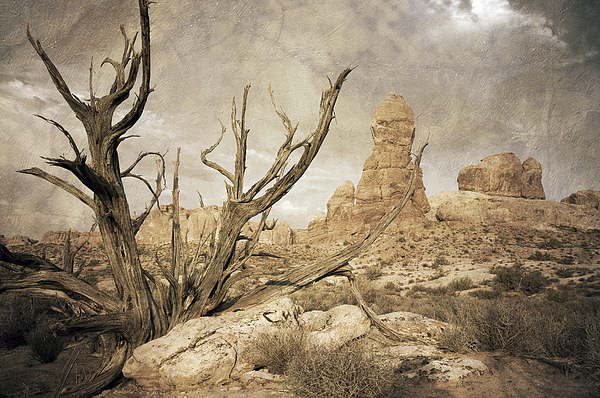 Desert Tree by Mike Irwin