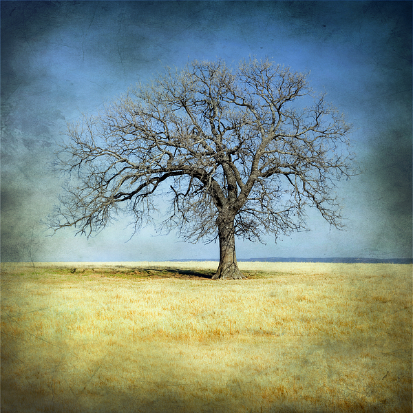 Lone Tree by Mike Irwin
